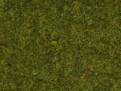 Wildgras Wiese, 9mm