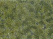 Bodendecker-Foliage mittelgrün