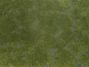 Bodendecker-Foliage dunkelgrün