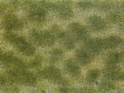 Bodendecker-Foliage grün/beige